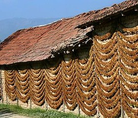 320px-Tobacco_Drying,_Kostinci